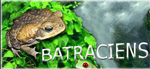 batraciens-reptiles