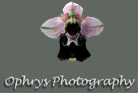 logo-ophrys photography.jpg (9658 octets)